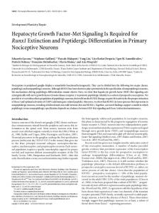 Hepatocyte Growth Factor-Met Signaling Is Required for ...