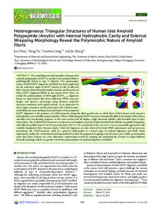 Heterogeneous Triangular Structures of Human Islet Amyloid ...