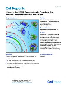 Hierarchical RNA Processing Is Required for Mitochondrial Ribosome ...