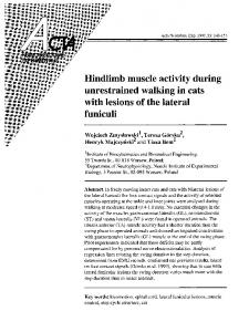 Hindlimb muscle activity during unrestrained walking in cats with