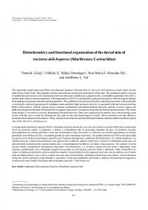 Histochemistry and functional organization of the