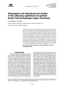 Histological and ultrastructural studies of the olfactory epithelium of