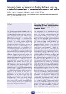 Histomorphological and immunohistochemical findings in testes, bul