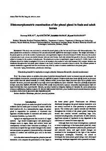 Histomorphometric examination of the pineal gland in foals and adult ...