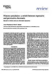 Histone acetylation: a switch between repressive ... - Semantic Scholar
