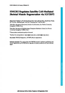 HMGB2 regulates satellite cell-mediated skeletal muscle regeneration ...