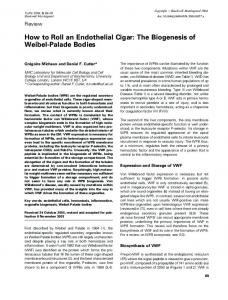 How to Roll an Endothelial Cigar: The ... - Wiley Online Library