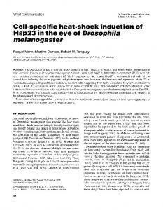Hsp23 in the eye of Drosophila - NCBI