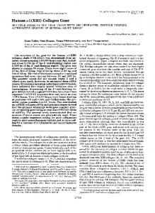 Human a1 (XIII) Collagen Gene - The Journal of Biological Chemistry