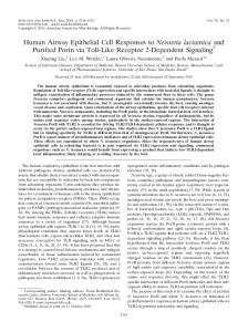 Human Airway Epithelial Cell Responses to Neisseria lactamica and ...