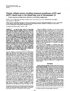 Human collagen genes encoding basement membrane al(IV) and ...