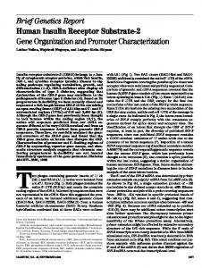 Human insulin receptor substrate-2: gene organization and promoter ...