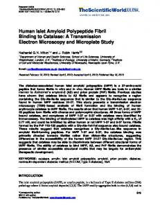 Human Islet Amyloid Polypeptide Fibril Binding to ...