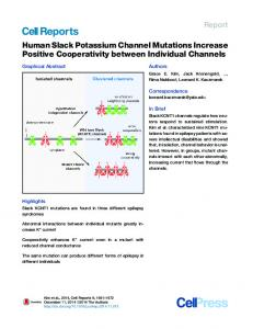 Human Slack Potassium Channel Mutations Increase Positive ...