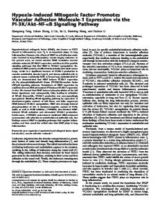 Hypoxia-Induced Mitogenic Factor Promotes Vascular ... - ATS Journals