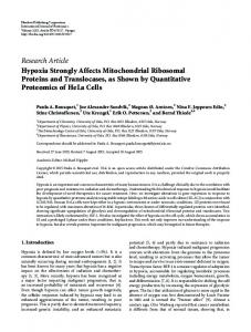 Hypoxia Strongly Affects Mitochondrial Ribosomal Proteins and ...
