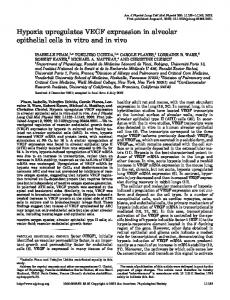 Hypoxia upregulates VEGF expression in alveolar epithelial cells in ...