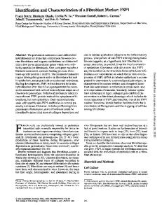 Identification and Characterization of a Fibroblast