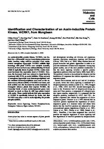 Identification and Characterization of an Auxin ...