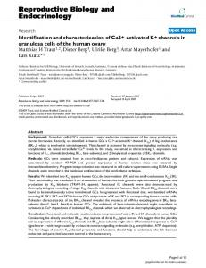 Identification and characterization of Ca2+-activated K+ channels in ...