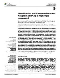 Identification and Characterization of Novel Small