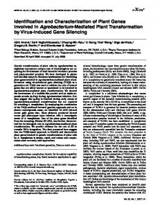 Identification and Characterization of Plant Genes ... - Personal.psu.edu