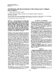 Identification and characterization of the human type II collagen gene ...