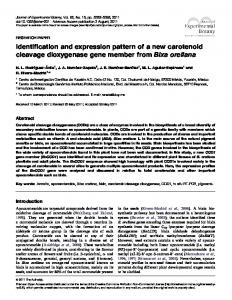 Identification and expression pattern of a new carotenoid cleavage ...