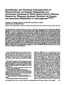 Identification and Functional Characterization of ...