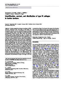 Identification, content, and distribution of type VI collagen in bovine ...