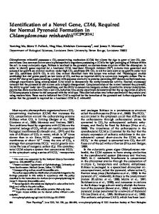 Identification of a Novel Gene, CIA6, Required for ... - Plant Physiology