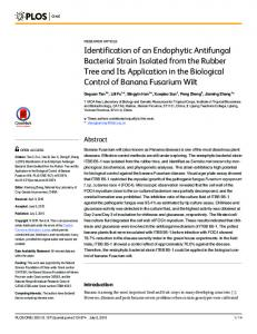 Identification of an Endophytic Antifungal Bacterial Strain ... - PLOS