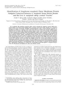 Identification of Anaplasma marginale Outer Membrane Protein ...