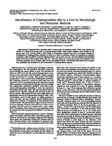 Identification of Cryptosporidium felis in a Cow by Morphologic and ...