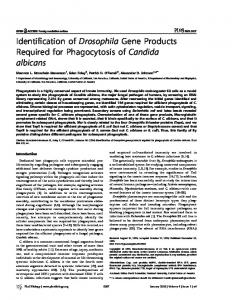 Identification of Drosophila Gene Products Required for ... - UCSF.edu