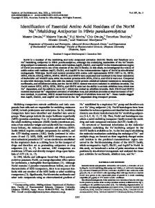 Identification of Essential Amino Acid Residues of the NorM Na+ ...