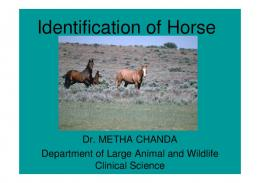 Identification of Horse
