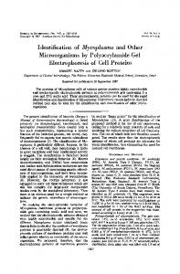 Identification of Mycoplasma and Other Microorganisms by