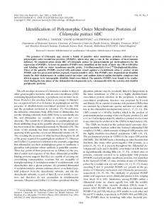 Identification of Polymorphic Outer Membrane Proteins of Chlamydia ...
