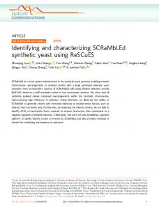 Identifying and characterizing SCRaMbLEd synthetic yeast ... - Nature