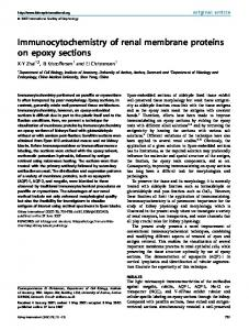Immunocytochemistry of renal membrane proteins on epoxy ... - Core