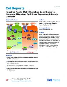 Impaired Reelin-Dab1 Signaling Contributes to Neuronal ... - Cell Press