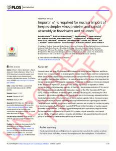 Importin #_#x03B1;1 is required for nuclear import of herpes ... - PLOS