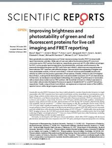 Improving brightness and photostability of green and red fluorescent ...