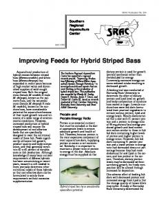 Improving Feeds for Hybrid Striped Bass