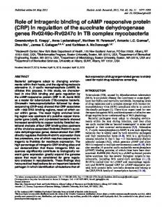 in regulation of the succinate dehydrogenase genes ... - Oxford Journals