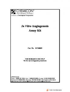 In Vitro Angiogenesis Assay Kit