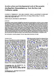 In vitro culture and developmental cycle of the parasitic dinoflagellate ...