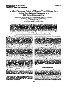 In Vitro Polymerase Activity of Thogoto Virus - PubMed Central Canada