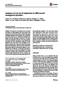 Incidence of root rot of muskmelon in different soil